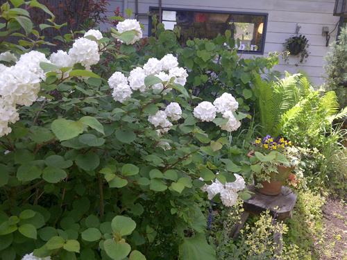 at robin's garden 2